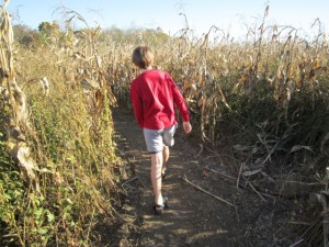 Eoghan in the corn maze