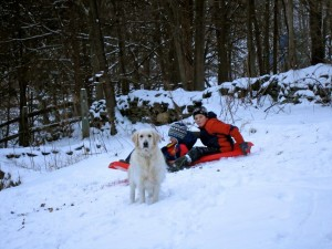 Eoghan and Conall sledding, with Angel