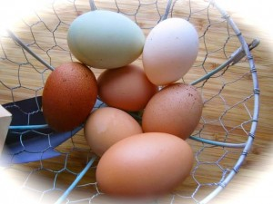 Eggs frrom our chickens